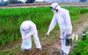 شركة رش مبيدات حشرية بالجبيل
