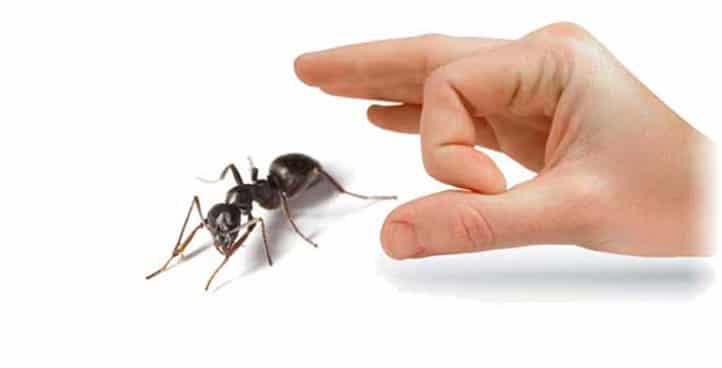 مكافحة النمل الابيض نهائيا من المنزل
